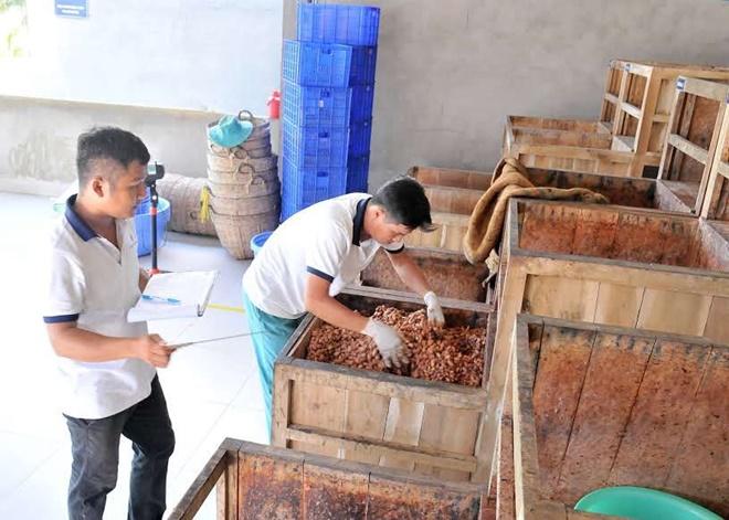 Cacao-Mekong-4